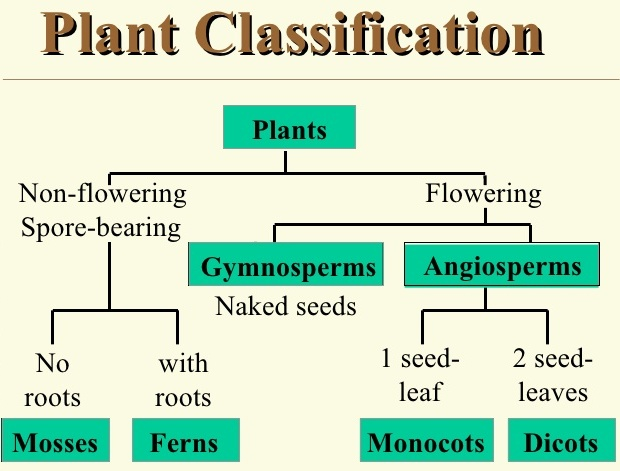 Lesson Plan of Plants (Flowering & Non-Flowering Plants) | Effective ...