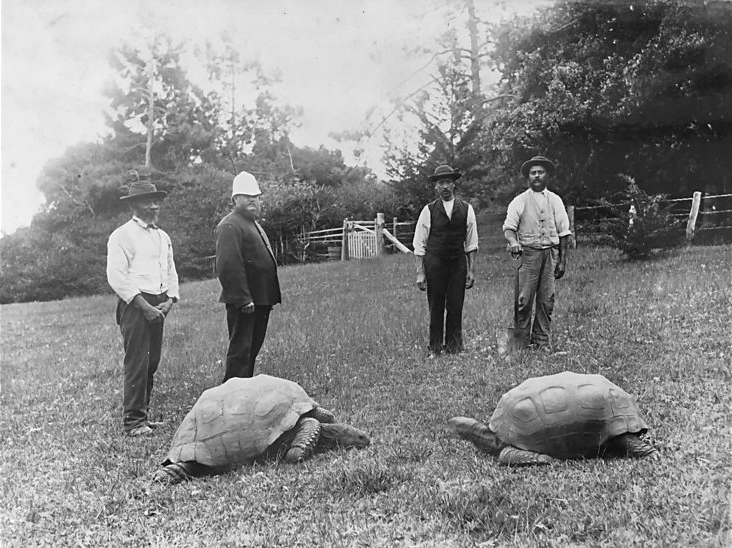 jonathan sang kura-kura raksasa tertua di dunia