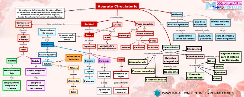 imagen de un mapa conceptual del aparato circulatorio nuevo, con sus partes y funciones