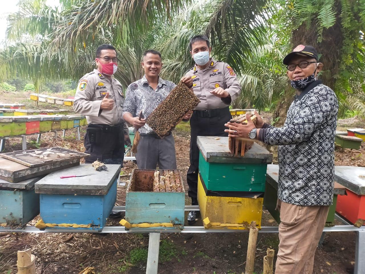 Pembudidaya Lebah Madu Pendatang Banyak Masuk ke Tanjabtim, Pembudidaya Lokal Mengeluh