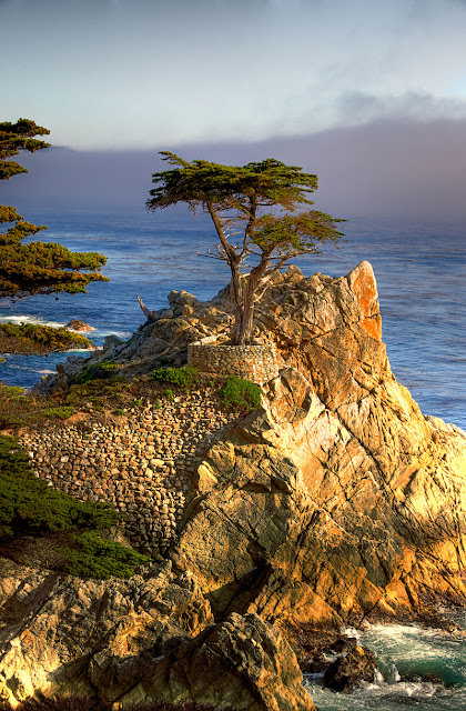 The Lone Cypress, 17-Mile-Drive, California