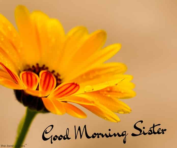very good morning sister