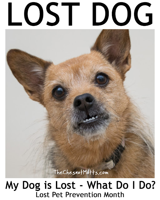 My Dog Is Lost - What Do I Do? - Lost Pet Prevention Month