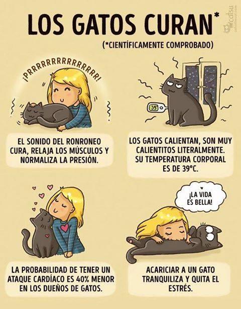propiedades curativas de los gatos