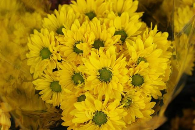 Bunga yang Bisa Dimakan dan Manfaatnya untuk Kesehatan