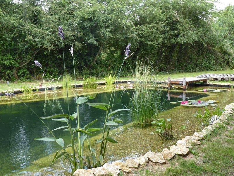 Bassin de baignade naturelle en autoconstruction un an - Autoconstruction piscine naturelle ...