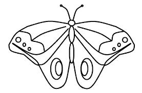 Sketsa gambar kupu kupu sederhana