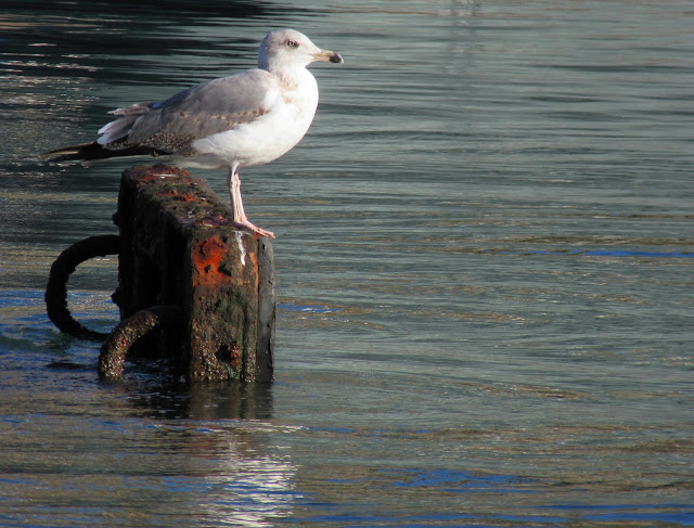 the seagull agreed to pose for me