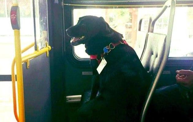 Mundo: Para ir ao parque, cadela pega ônibus sozinha todos os dias nos Estados Unidos