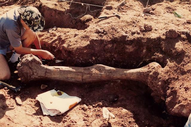 Fóssil do 'Arrudatitan maximus', que viveu no período Cretáceo, foi encontrado em Cândido Rodrigues (SP) em 1997