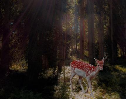 Bambi regény jellemzés, vélemény