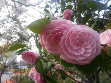 Kelopak Bunga cantik\