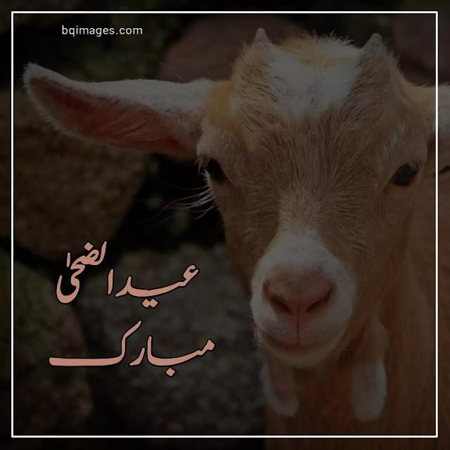 bakra eid profile picture