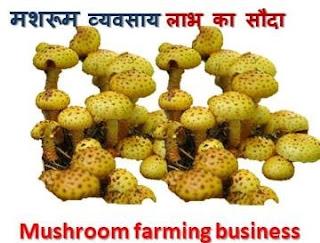 50 हजार रुपये में शुरू करें ये बिजनेस, 5 लाख तक की होगी कमाई | Low Investment Business Idea