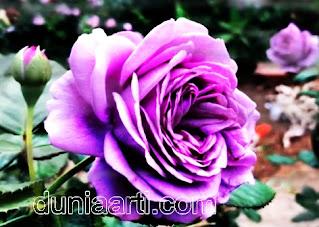 Arti Mimpi Di Kalungi Bunga