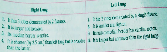 Difference between Right lung and Left lung