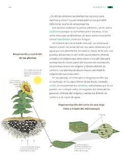 Apoyo Primaria Ciencias Naturales 3ro Grado Bloque II Tema 1 Interacciones de los seres vivos