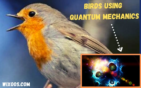 Birds see magnetic fields by using quantum mechanics