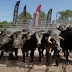 Coors Pro Xtreme Bull Freestyle Covid-19 Press Release