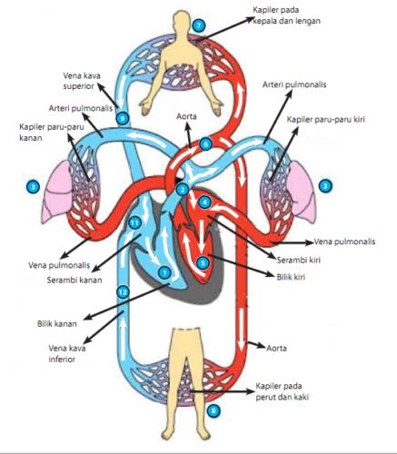Tips Agar Peredaran Darah Lancar