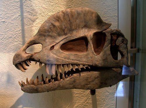 prehistoric beast of the week the paleontology behind pokemon