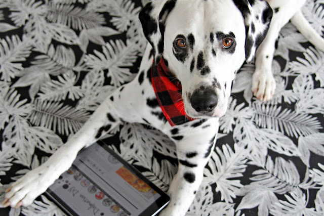 Dalmatian with an iPad looking at Dalmatian DIY dog blog