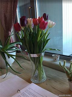 Bilde av tulipaner jeg fikk i gave fra familien, her sammen med bokmanuset mitt.