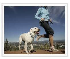 Todos queremos que nuestros queridos amigos de cuatro patas a estar allí por el mayor tiempo posible. Aunque algunos perros desarrollarán problemas de salud en sus vidas
