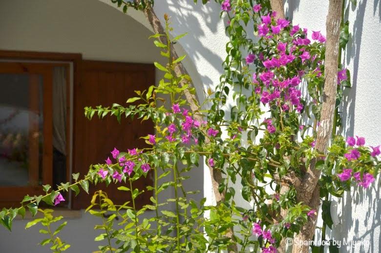 Dénia スペインのリゾート地の白い家とブーゲンビリアの一角