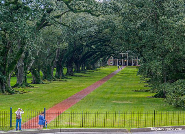 Famosa alameda de carvalhos da Oak Alley Plantation, na Luisiana, EUA