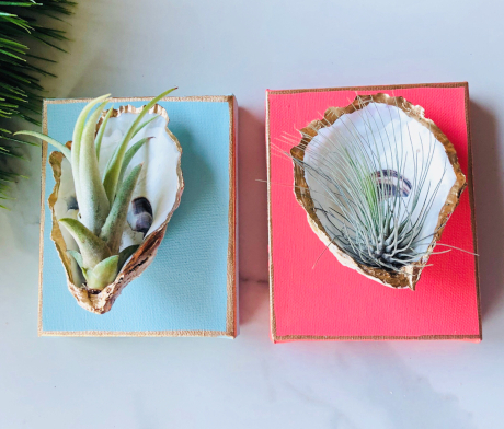 Coastal Display Ideas For Tillandsia Air Plants In Shells