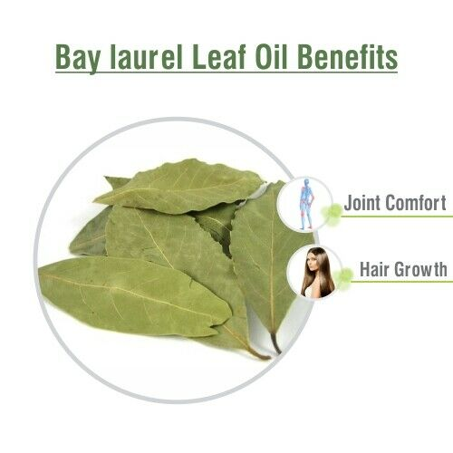 Bay Laurel Leaf Oil 100% Natural Pure Undiluted Uncut Essential Oil 5ml