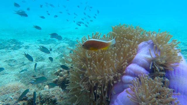 Underwater scenery at Tanjung Putus, Lampung, Indonesia