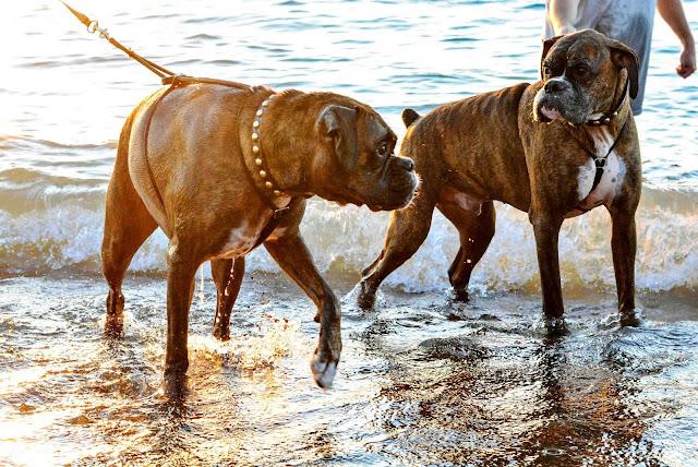 Boxers Beach