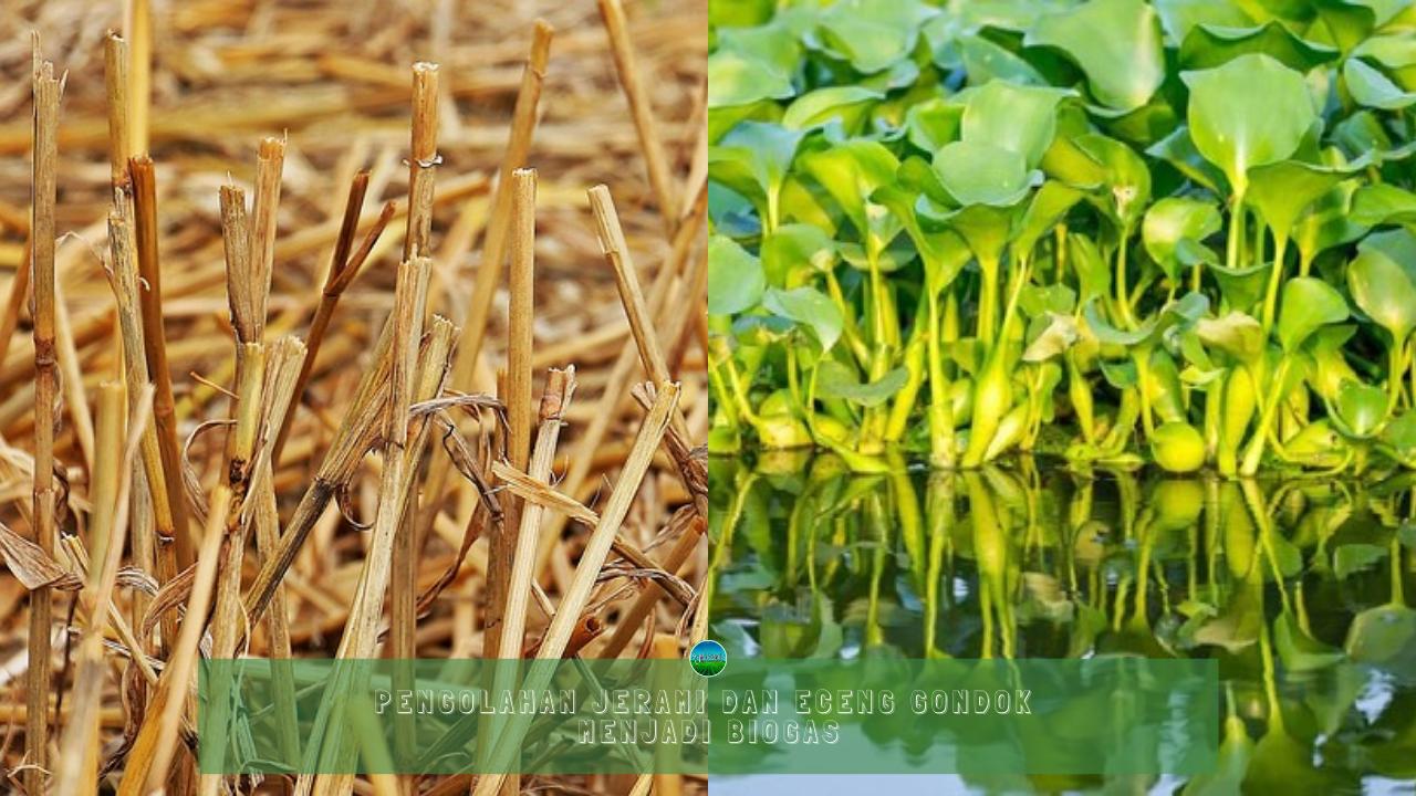 Pengolahan Jerami dan Eceng Gondok Menjadi Biogas