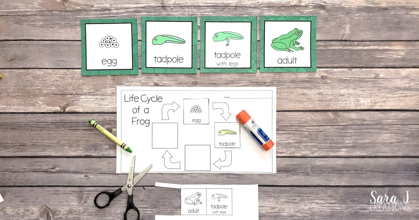 Learn about the life cycle of a bee, flower, butterfly, and frog with these free printables! Practice sequencing the life cycle with these cards and then complete a cut and glue activity.