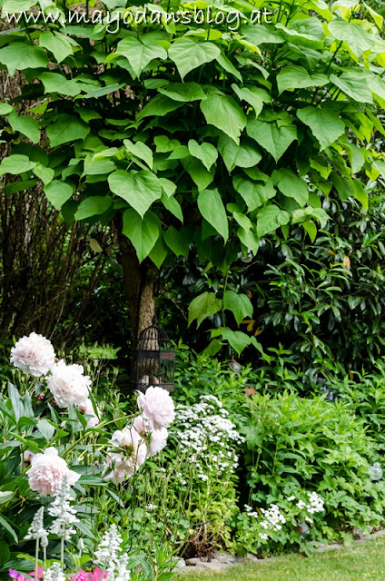 Trompetenbaum im Landhausgarten