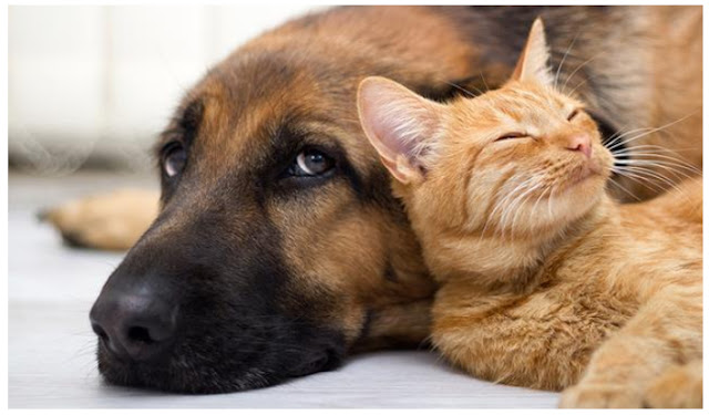Cat and Dog Darrhea Medicine and How To Diagnose