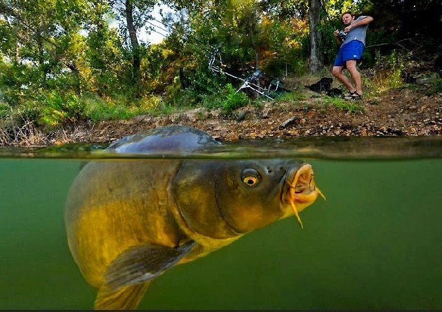 Tips Mancing Ikan Mas