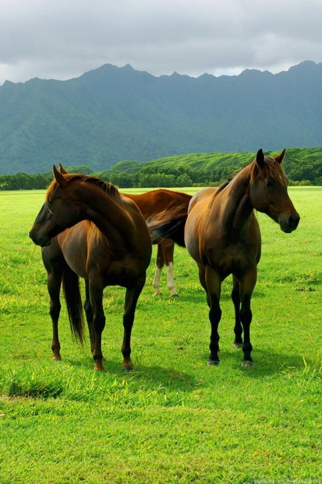 Mobile Wallpaper: Animals Horses Horses On Pasture Iphone