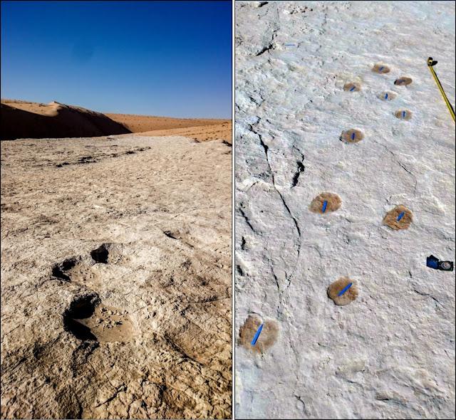 Ancient human footprints in Saudi Arabia give glimpse of Arabian ecology 120,000 years ago