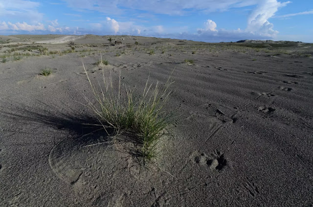 Thrive Culili Point Sand Dunes Paoay Ilocos Norte Philippines
