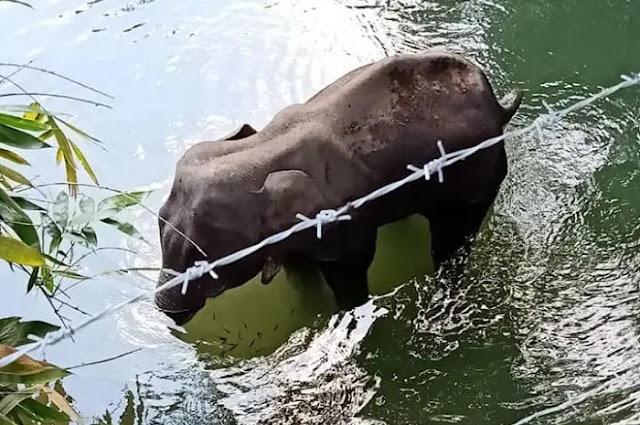 Gajah Hamil Meninggal Berdiri Setelah Penduduk Memberi Makan Petasan