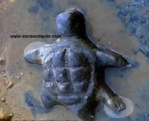 السلاحف لها أقدام تختلف في الاتجاه