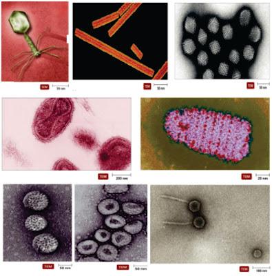 Penyakit Virus Pada Ikan :Karakteristik Penyakit Virus