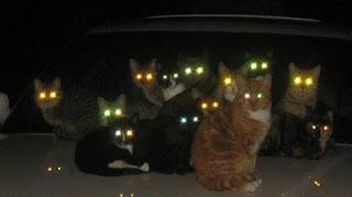 göz-kedi