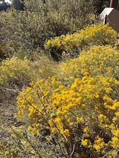 Photo of yellow wildflowers