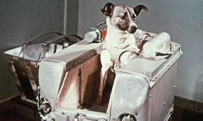 laika o cão do espaço