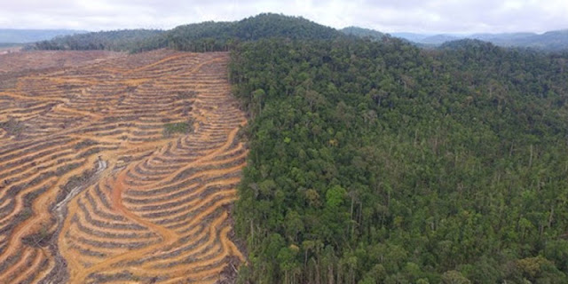 Data Lapan: Hutan Di Kalsel Menyusut 129 Ribu Hektare Dan Perkebunan Meluas 219 Ribu Hektare