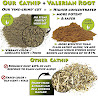 Qualities of catnip